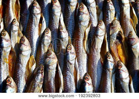 Dry Mullet Fish In Sunlight