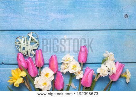 White and pink spring flowers and decorative heart on blue wooden background. Place for text. Selective focus.