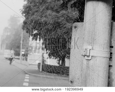 a spider web on a lamppost in the city