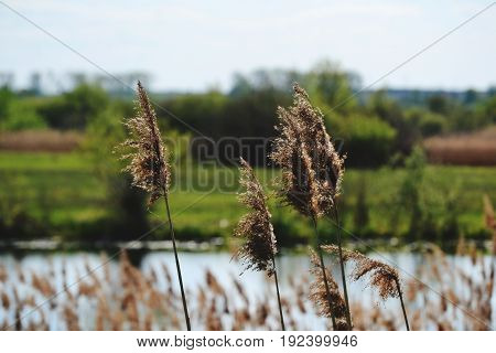 The wind gently rockes the grass. It's summer.