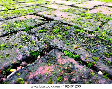 the picture of dirty and old red brick ground with green moss covered