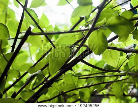 COLOR PHOTO OF LEAVES UNDER SUNLIGHT, STOCK PHOTO