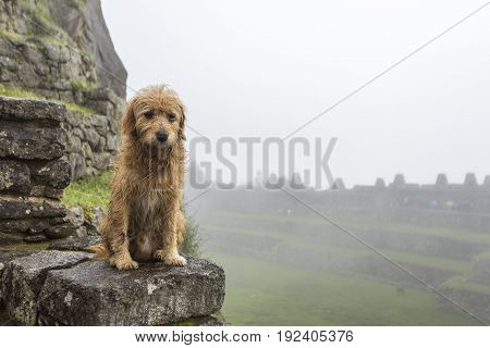The little wet doggy is sad due to the weather in Machu Picchu