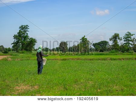 Surin Thailand - Jun 19 2017 - Farmers is doing tiller by tractor in their field