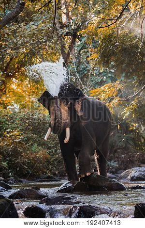Elephants Spraying Water In The Stream With Blurry Motion