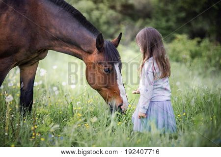 Girl with her friend - horse walking on summer field