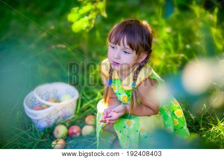 Girl with a basket of an apples in summer garden.