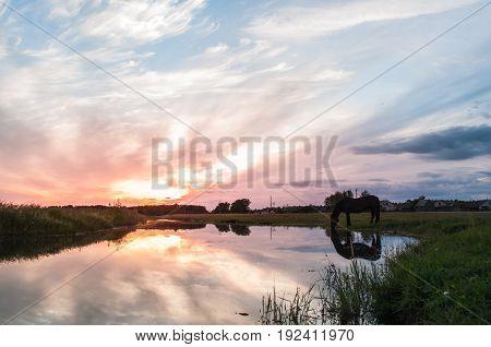 A Horse Drinks Water At Sunset With Reflection,