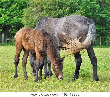 close on foal and mare in a meadow