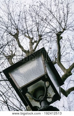 Lantern And Bare Tree In Urban Park In Florence