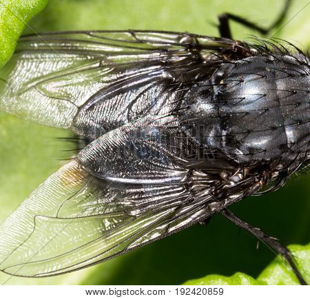 Wings of a fly in the nature. Super macro