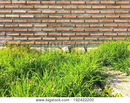Brick wall and a green rice field , brick wall background, brick wall for exterior design with copy space for text or image. Red organic brick wall and a green rice field texture background.