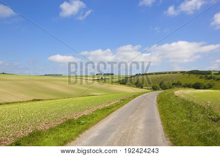 Pea Crop And Highway