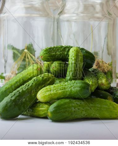 the harvesting and canning cucumbers for winter