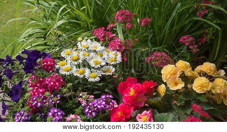 Colorful Summer Flowers In The Garden
