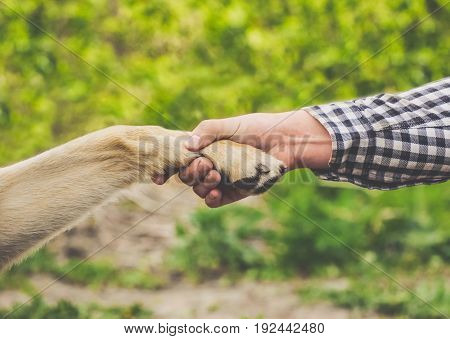A man holds a dog's paw in his hand. The concept of friendship and love for animals.