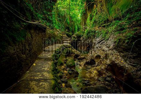 Stoned path inside of the Monkey Forest Sanctuary, a nature reserve and Hindu temple complex in Ubud, Bali, Indonesia.