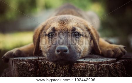 A little puppy sleeps on a hemp. Lonely puppy