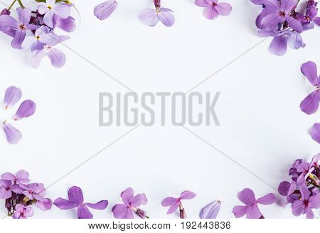 Purple flowers on white marble background. Copy space.
