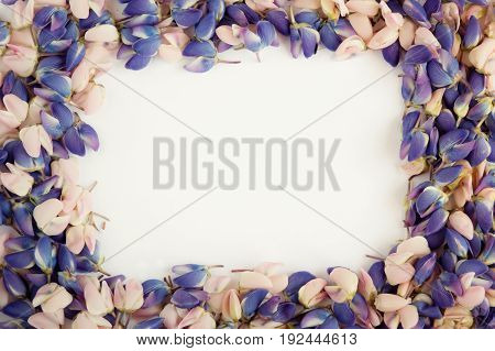 The flower petals of blue and pink lupine. Background of flowers.