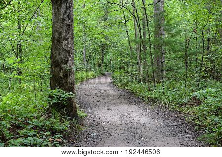 A peaceful trail in the woods of North Carolina