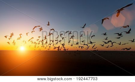 Flock of Seagulls silhouettes over the Sea during amazing sunset.