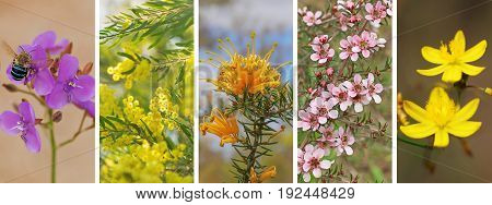 Australian banner panorama set of Australian native wildflowers