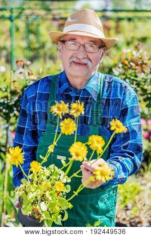 Cheerful senior gardener showing a yellow, potted flower. Active elderly man and gardening concept.