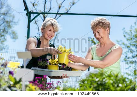 Attractive mature gardener helps senior client with flowers and plants. Gardening and people concept.