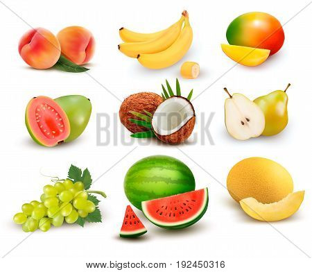 Collection of fruit and berries. Watermelon grape pear banana mango coconut peach guava. Vector Set.