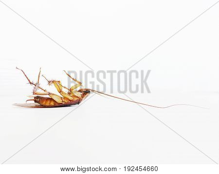 Roach Dead On a white background