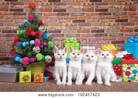 Four fluffy white kittens sitting in a row on brown carpet next to small Christmas tree with yarn balls and toy mice decorations surrounded by colorful presents with bows.