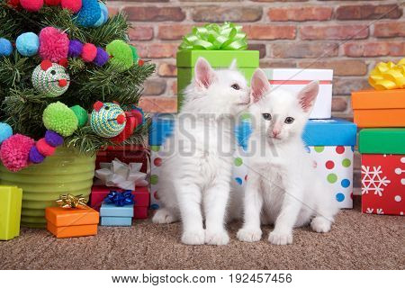 Fluffy white kittens on brown carpet one looking at viewer other whispering in his ear. Sitting next to small christmas tree with yarn ball and toy mice decorations surrounded by colorful presents