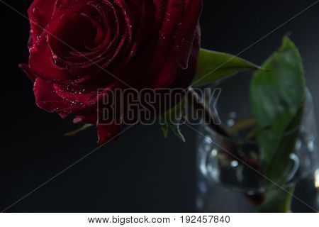 Red rose in a glass of water on a black background