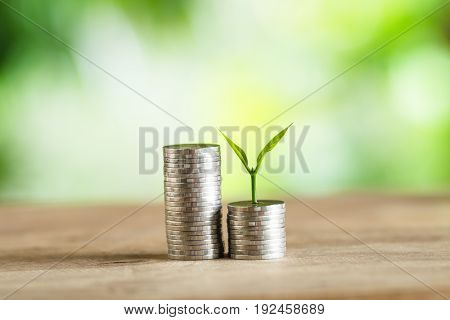 Coin Money Piles Of Coins Trees on the pile of money Economy, Investment And Saving Concept