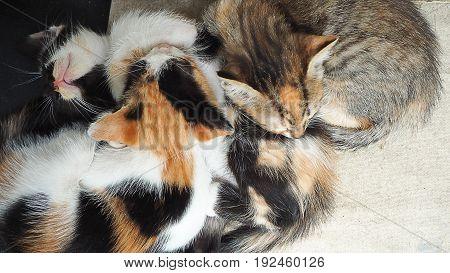 Three little kitten are sleeping on white floor