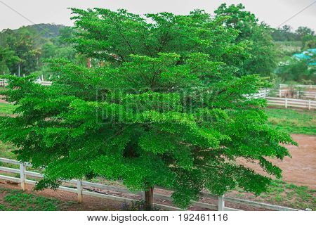 Green tree at summer day. Green saturated leaves in sunlight. Bright summer background. Green grass and trees in park in summer