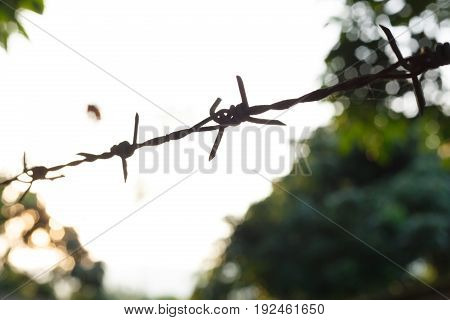 single barbed wire fence with sharp spikes