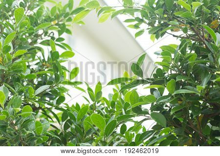 Rain Drop Water On Green Leaf Nature, Abstract Greenery Background