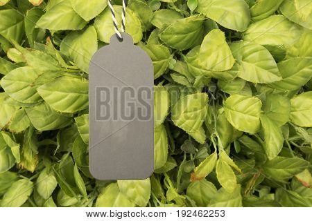 Grey paper price tag hanging on green tree with copy space for some text advertise promotion sale concept