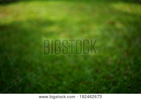 Blurred Image, Green Grass Turf