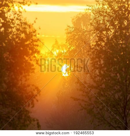 The rising sun behind the trees in the morning