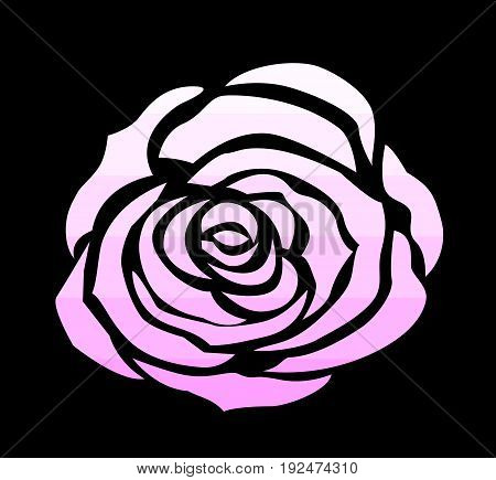 pink rose icon draw vector for decoration on black background