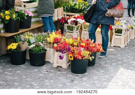 Fresh flowers for sale at Czech flower market in Prague