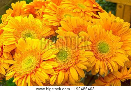 Bouquet of beautiful bright orange gerberas in a vase