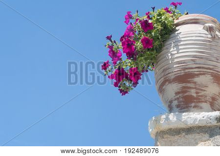 Colour Flowers Growing In Vase Against Blue Sky In Corfu Greece