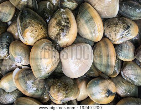 Fresh clams background, sea shells closeup, Krabi,Thailand