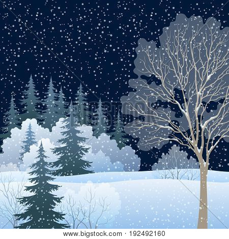 Winter Christmas Holiday Woodland Night Landscape, Forest with Snow Covered Trees and Snowflakes. Eps10, Contains Transparencies. Vector