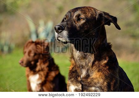 Pair of dogs looking attentively in the same direction