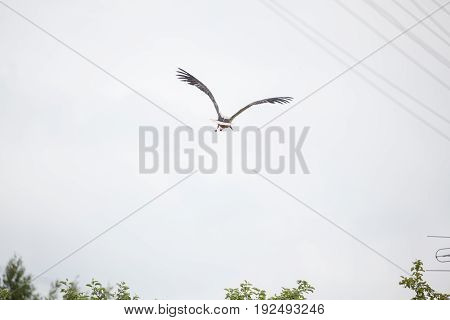 The adult white stork flies away with the raised wings against the background of the light blue sky
